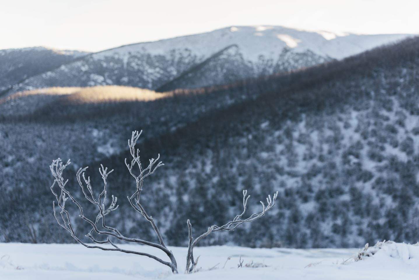 My Favourite Tree Falls Creek.JPG