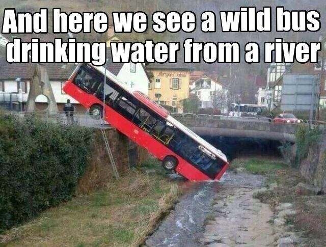 and-here-we-see-a-wild-bus-drinking-water-from-a-river.jpg